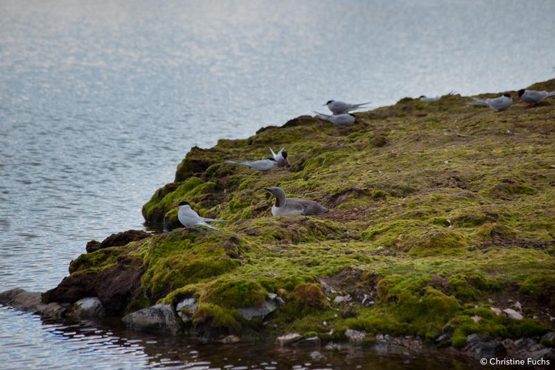 La faune au Svalbard