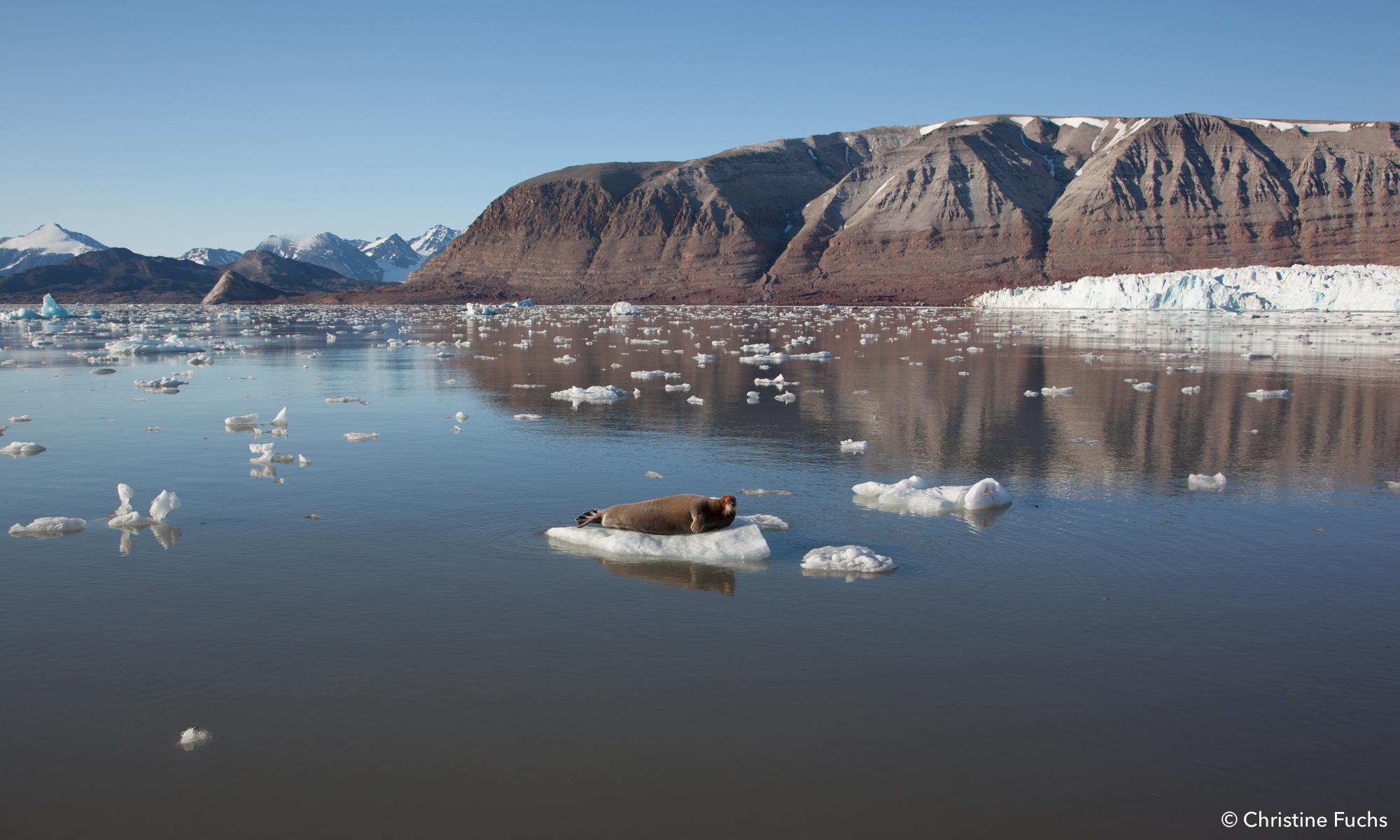 Récits et photos de voyage au Svalbard