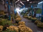 L'allée des bananes, au marché de Mysore