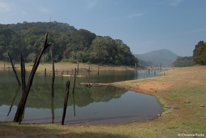 Sérénitude du lac à la réserve de Periyar